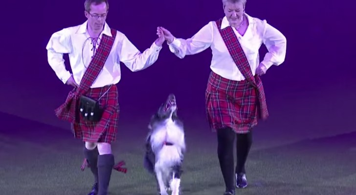 The dog that amazes everyone at Crufts 2014