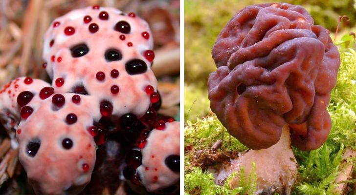 8 tipi di funghi che assomigliano molto di più a delle creature aliene