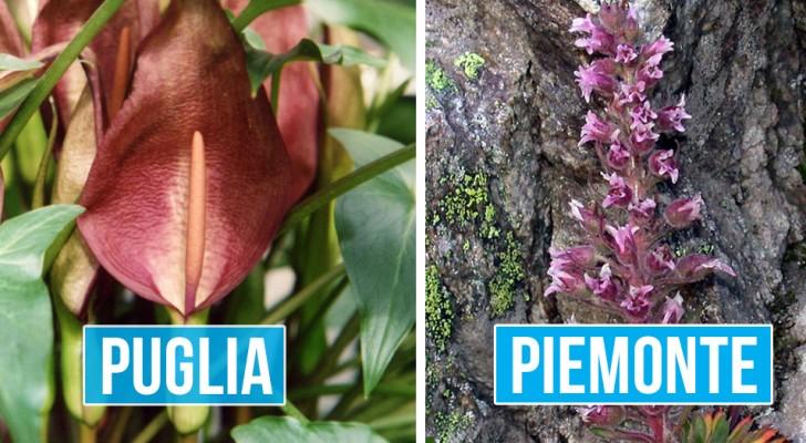 Un gruppo di botanici ha eletto le 20 specie di piante