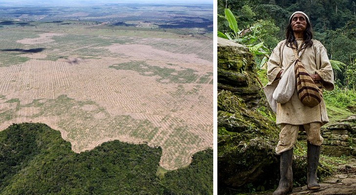 Gli indigeni dell'Amazzonia creeranno e proteggeranno la più grande area verde del mondo