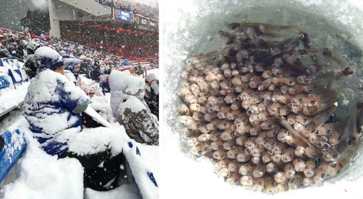 26 immagini che dimostrano come l'inverno può essere spettacolare e allo stesso tempo terribile