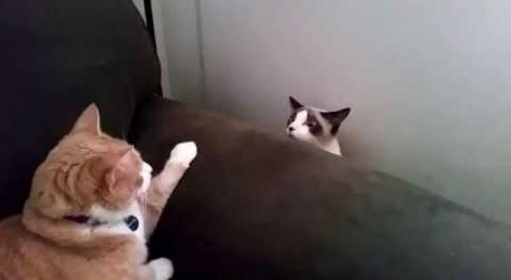 Aucun des deux n'avait vu un autre chat jusqu'à maintenant