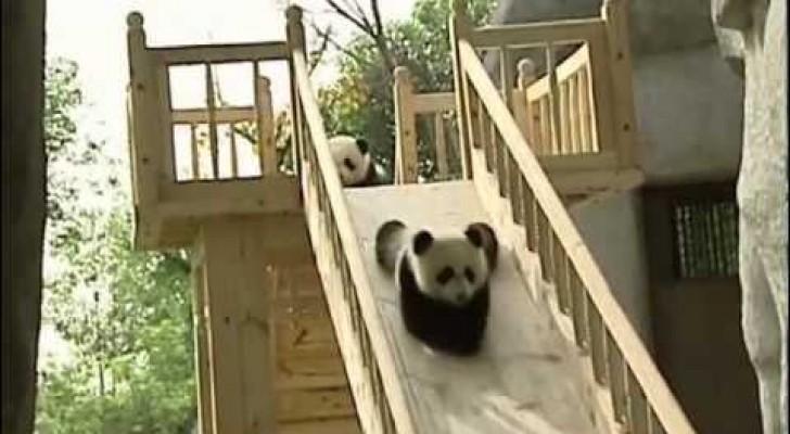 Kleine Pandas haben Spaß beim Rutschen