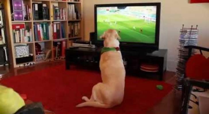 Portugal foi eliminado, veja a reação deste torcedor especial...