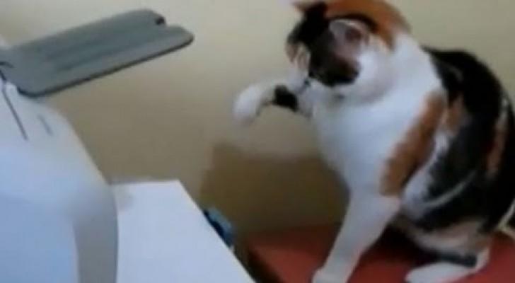 Gatos contra Imprimidoras