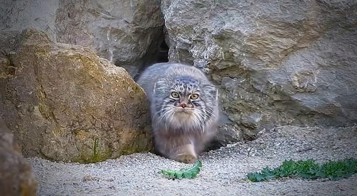 El gato sospecha de la telecamara como si fuese un objeto alienigena.
