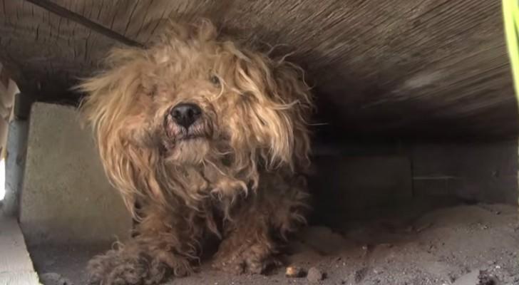 Este cão ficou um ano esperando por seu dono que morreu, até que alguém se deu por conta e o levou para casa