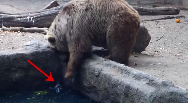Non riuscirete a credere al gesto di quest 39 orso quando ha for Le migliori cabine per grandi orsi