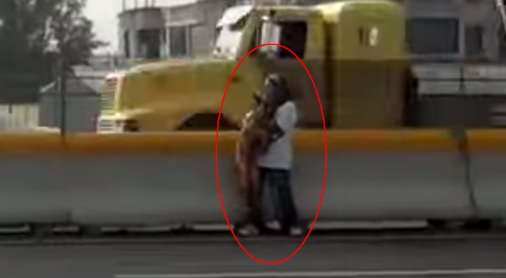 Un chien en danger sur l'autoroute et la courageuse opération de sauvetage qui risque de finir en tragédie