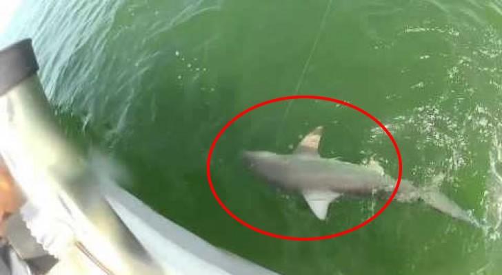 Er fängt einen Hai, aber ein noch größeres Exemplar klaut ihn ihm vor der Nase weg