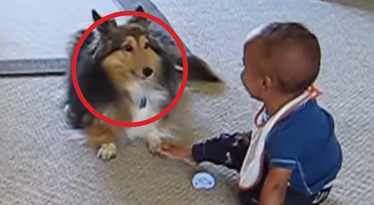 Se avete dubbi sull'importanza dei cani nella crescita dei bambini, guardate qui!