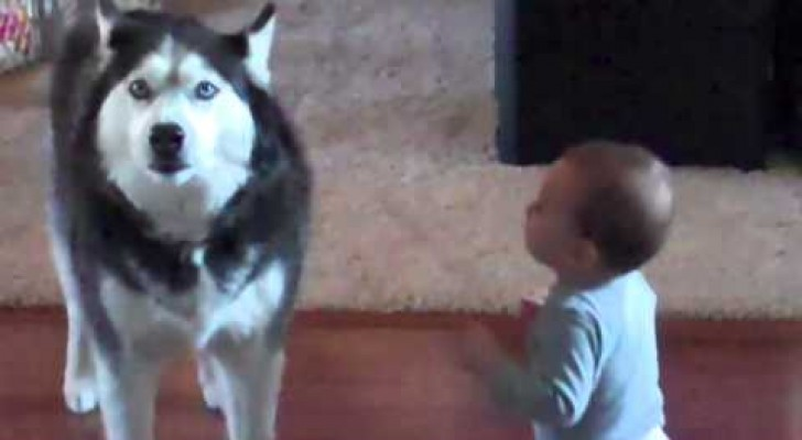 The interaction between this dog and this baby is amazing !
