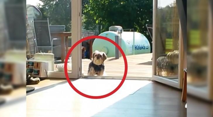 Quando capirete il motivo per cui il cane non entra in casa... Morirete dal ridere!