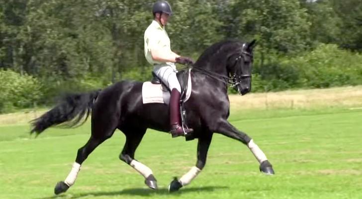 La belleza y la elegancia de este caballo los dejara sorprendidos