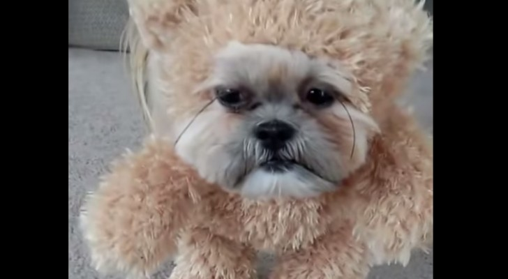 Who's behind this sweet little bear costume?