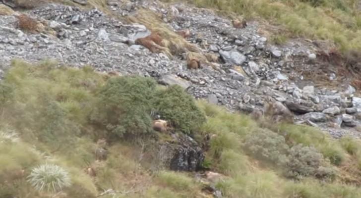 Cuantos animales estan en esta colina? No saquen la vista y lo descubriran...