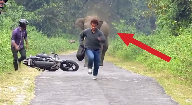 Two men are riding a motorcycle on a country road, but ... someone has a different idea !!