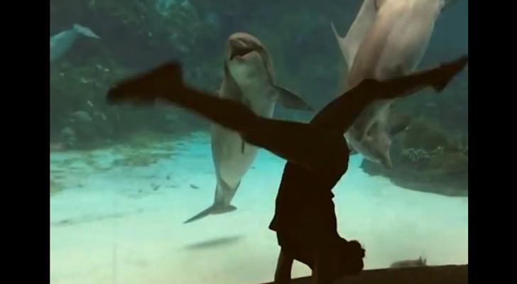 Una ragazza balla di fronte all'acquario: guardate la reazione del delfino...