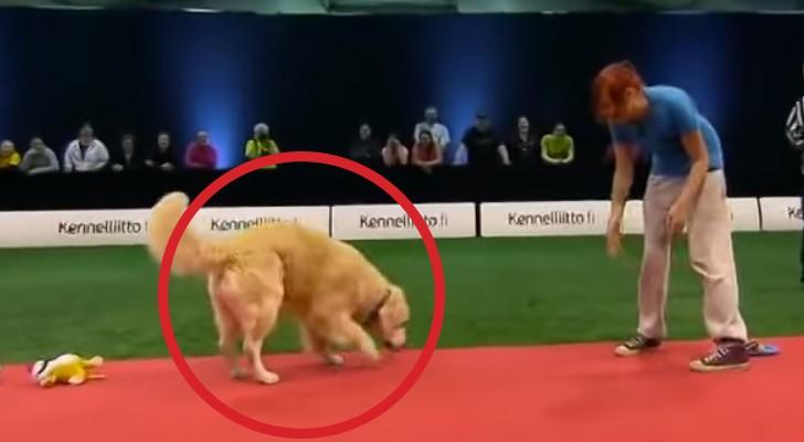 Le numéro de ce chien est un vrai DESASTRE, mais sa sympathie vous fera craquer