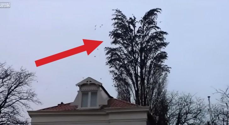 Parece uma árvore normal, mas espere para ver o que acontece!