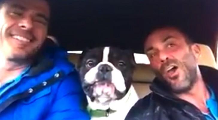 2 mannen zingen hun lievelingslied: wat de hond doet sta je versteld van!