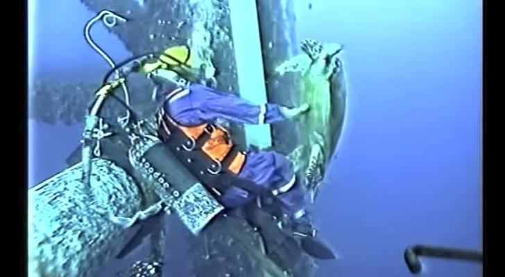 Este hombre mientras repara un tubo bajo del agua vive una experiencia inolvidable