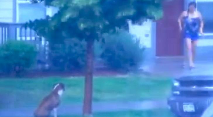 Un chien est OUBLIÉ sous la tempête: voilà ce que fait la voisine