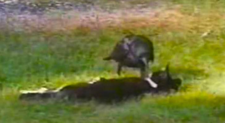 2 anziani osservano un gatto randagio, ma quando appare il suo amico restano sconvolti
