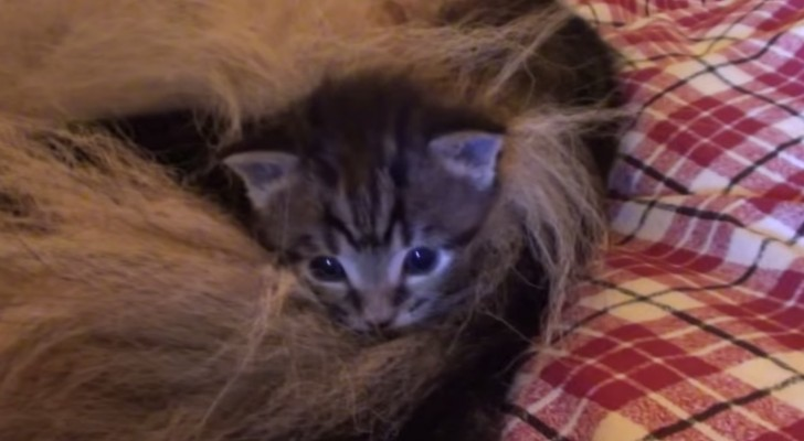 four orphan kittens arrive home, but someone is ready to adopt them !