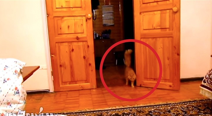 Zijn kat komt achterdochtig dichterbij: zodra hij op een kom drukt snap je waarom!