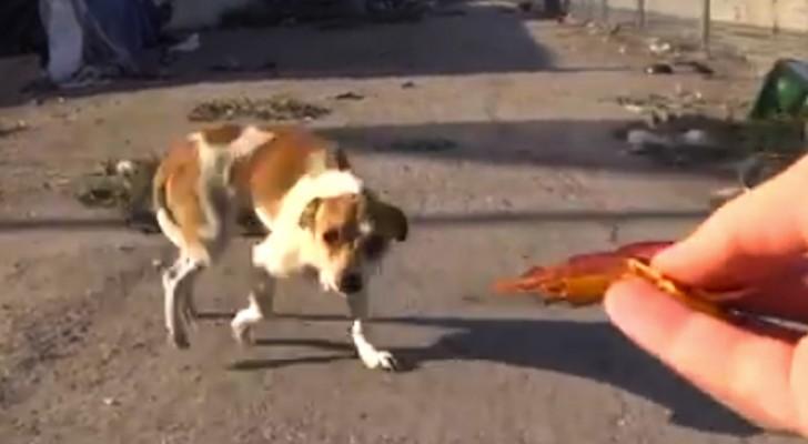 Luego un accidente, este perro vivia en la basura. Asi es como esta AHORA.