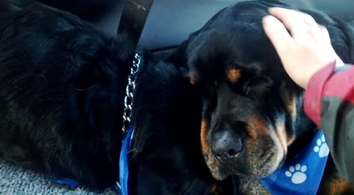 Ein Hund stirbt während der Nacht: Die Reaktion seines Bruders kann man nicht beschreiben.