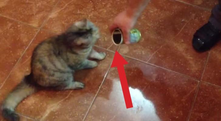 De reactie van deze kat op een blik olijven is iets wat je nog nooit hebt gezien!