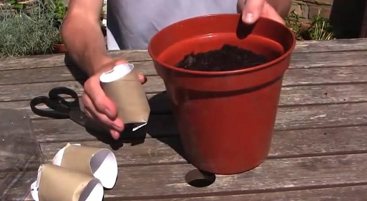 Handige tip voor in de tuin met... wc-rollen!