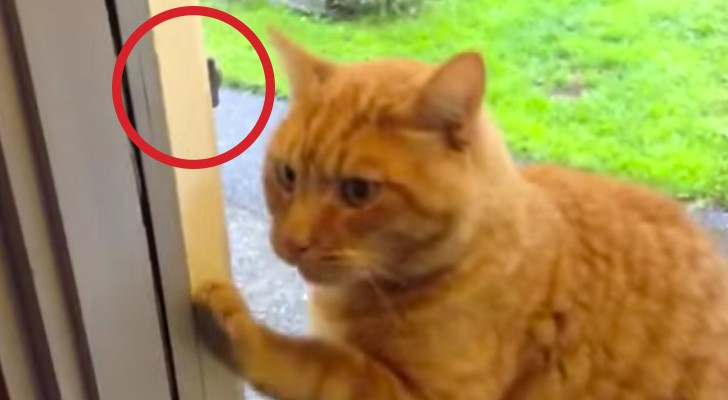 This cat really wants to get back in the house: look at what he comes up with !