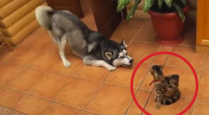 Lui vorrebbe giocare... ma la reazione del suo amico parla chiaro!