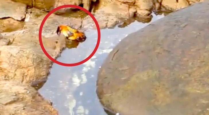 Ze filmen een krab, maar wat er dan gebeurt bezorgt ze de kriebels!