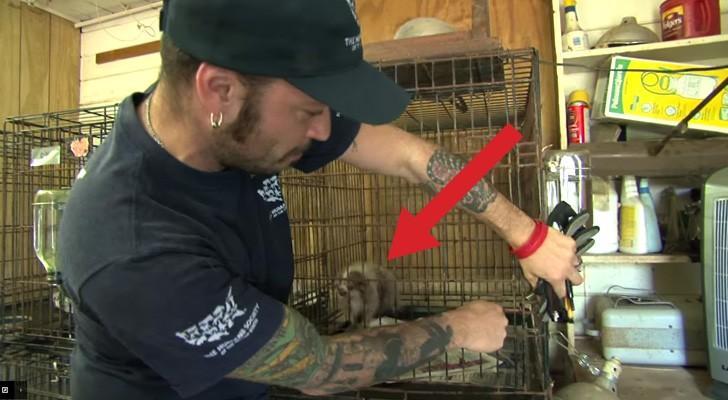 Você não pode imaginar as condições na qual vivia este cão. Veja como ele vive agora.
