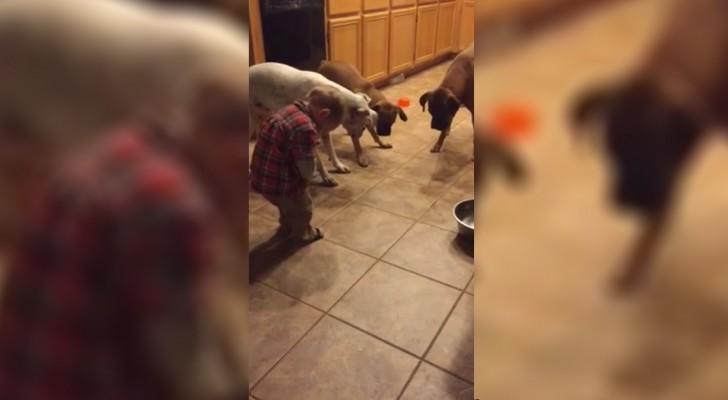 Ein Kleinkind spielt mit drei Hunden: Was sie machen, wird euch zum Lachen bringen