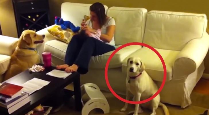 Uma criança está fazendo birra, mas veja como o cão age ... SENSACIONAL!