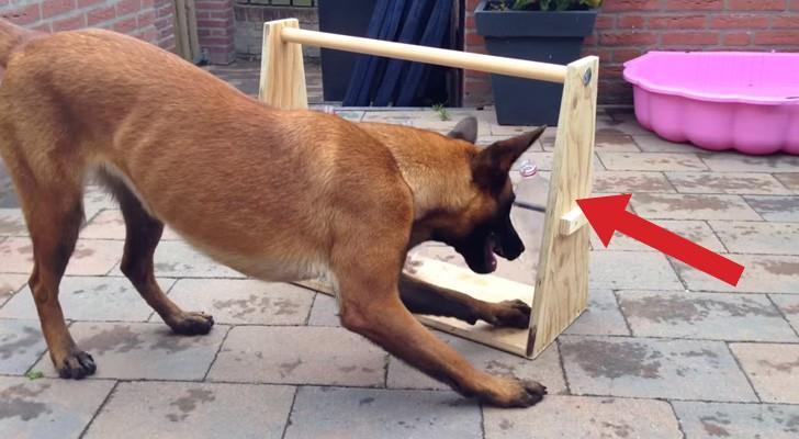 Ein einfaches und GENIALES Spiel, das euren Hund stundenlang beschäftigen wird