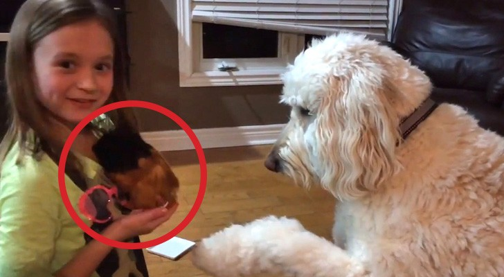 She takes home a guinea pig, but didn't expect such a sweet reaction from her dog...