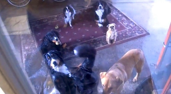 Een vrouw sluit haar honden op in de garage: kijk wat er gebeurt als ze vrij worden gelaten!