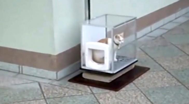 Apenas el gato entre en la caja transparente sucede algo GENIAL