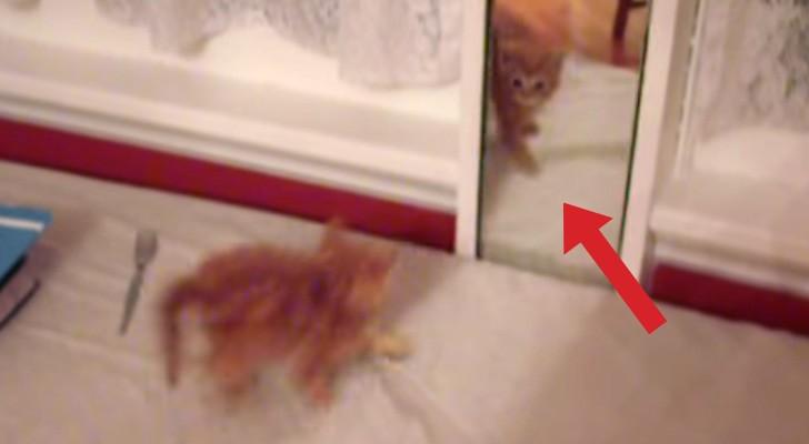 Um gato se vê no espelho: a sua reação é muito engraçada!