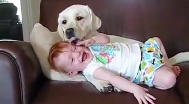 El perro la mima como si fuese un cachorro...su reaccion hace morir de la risa!