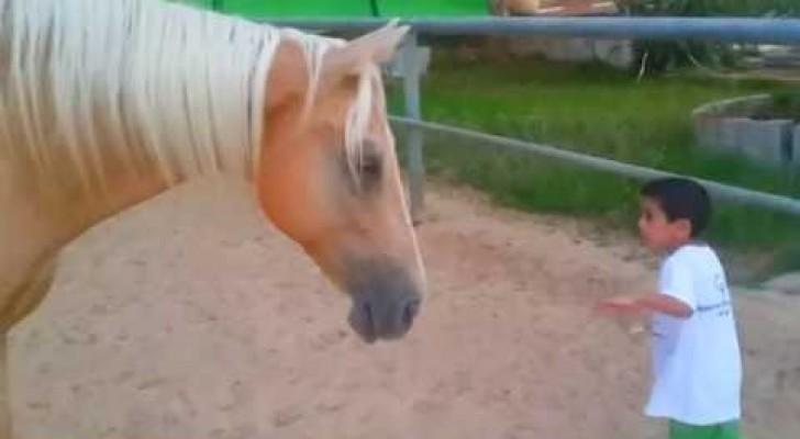 Um cavalo chega perto de um menino especial: o que acontece é pura emoção!