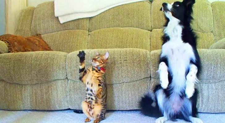 Dice al cane e al gatto di rotolare: ecco la gara più simpatica che abbiate mai visto!