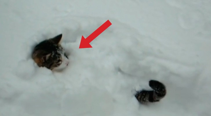 2 cats are playing in the snow, but one of them does something unexpected and HILARIOUS.
