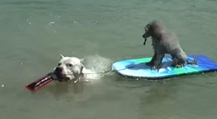 Des chiens arrivent sur la plage... Ce qu'ils font vous changera la journée!